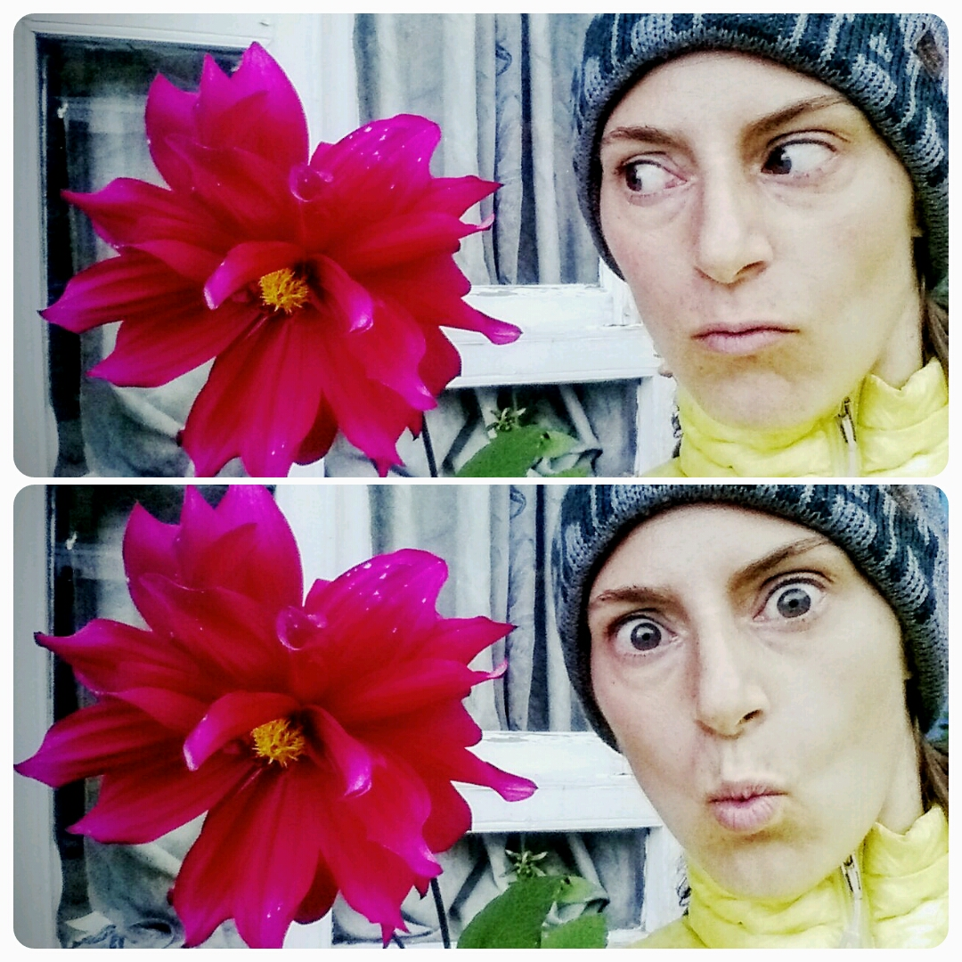 The flowers here are as big as my face. So are the spiders.